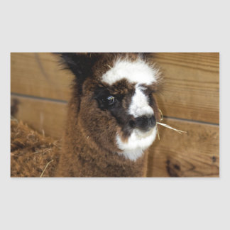 Little Baby Alpaca - Vicugna pacos Rectangular Sticker