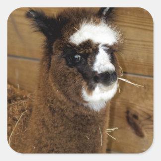 Little Baby Alpaca - Vicugna pacos Square Sticker