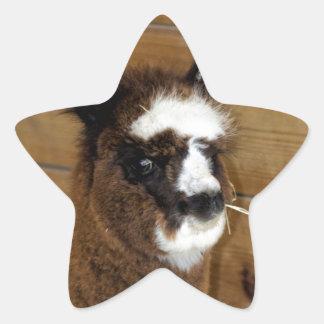 Little Baby Alpaca - Vicugna pacos Star Sticker