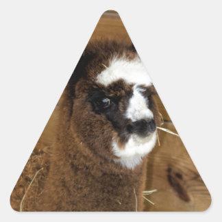 Little Baby Alpaca - Vicugna pacos Triangle Sticker
