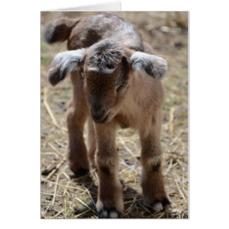Little Baby Goat Greeting Card