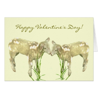 Little Baby Lambs on Yellow Valentines Day  Card