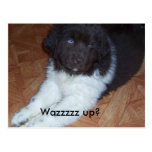Little baby newfie post card