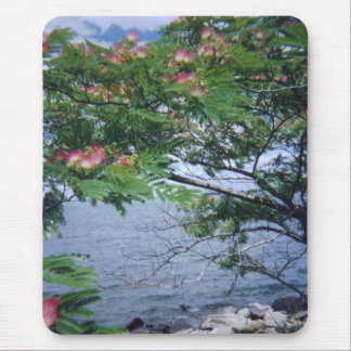 Little Bay Park flowering mimosa tree Mouse Pad