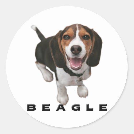 Little Beagle Classic Round Sticker