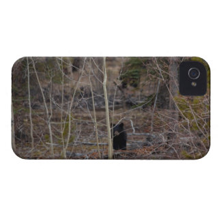 Little Bear in Big Forest iPhone 4 Case