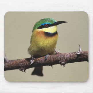 Little Bee-eater Mouse Pad