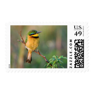 Little Bee-Eater Perching On A Branch, Maasai Postage