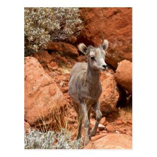 Little Big Horn Postcard