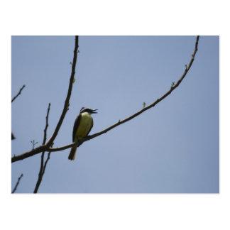 Little bird 1 postcard