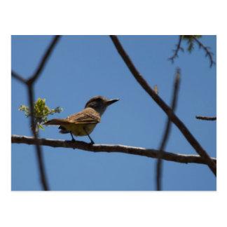 Little bird 2 postcard