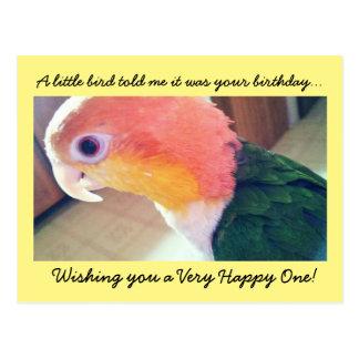 Little Bird Birthday Postcard