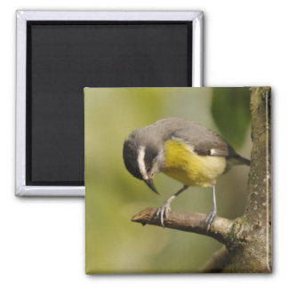 Little bird looking at his feet 2 inch square magnet