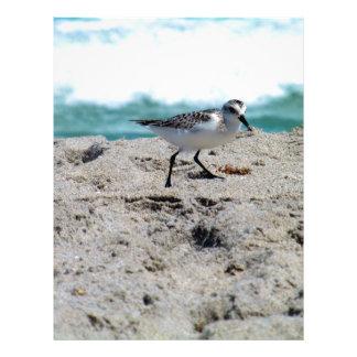 Little Bird on the Seashore Letterhead