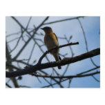 Little Bird Postcard