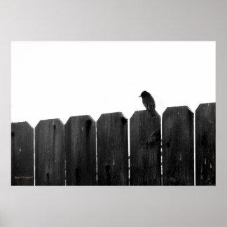 Little Bird Posters