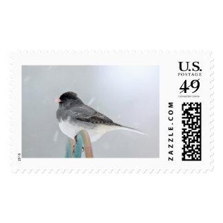 Little birdie postage stamp