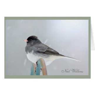 Little birdie signed photograph note card