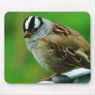 Little Birdie Wild Bird Photo mousepad