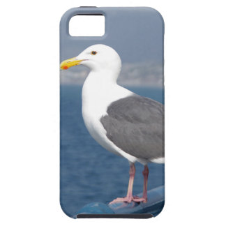 Little Birdy iPhone 5 Covers