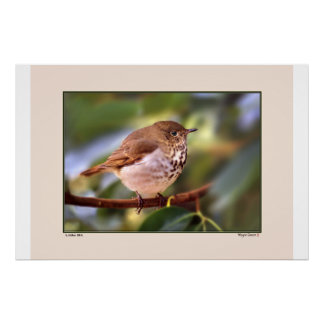 Little Bit - Finch in Madrone - N California Posters
