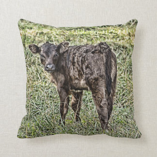 Little Black Angus Calf Square Pillow