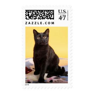 Little Black Cat Postage