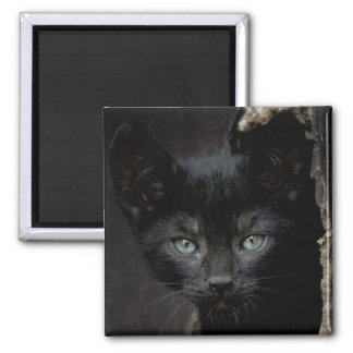 Little Black Kitty 2 Inch Square Magnet
