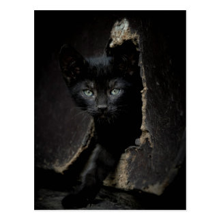 Little Black Kitty Postcard