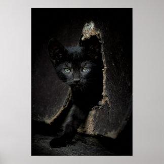 Little Black Kitty Poster