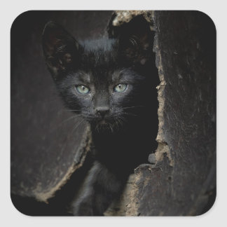 Little Black Kitty Square Sticker