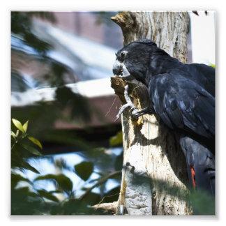little black parrot photo art