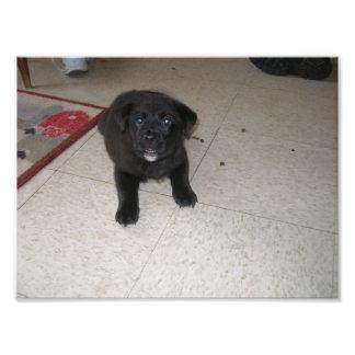 Little Black Puppy Laying Down on Floor Art Photo