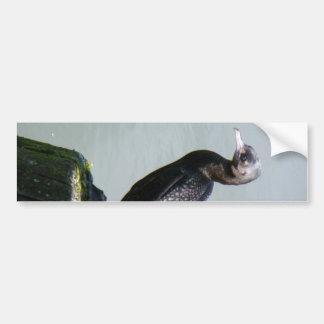 Little Black Shag Bumper Sticker