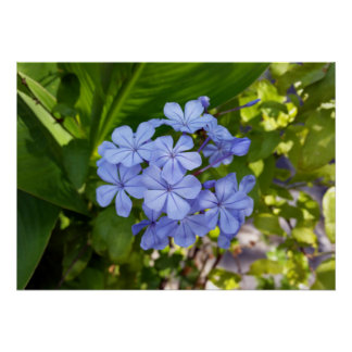little blue bouquet poster