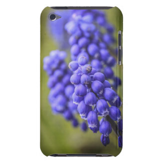 Little Blue Buds Barely There iPod Cover