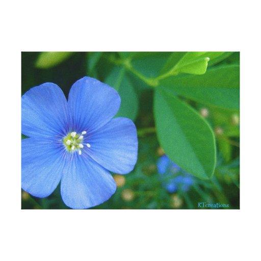 Little Blue Flower Canvas Print