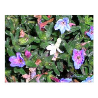 little blue flowers postcard