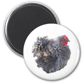 Little Blue Frizzle Cochin Rooster Refrigerator Magnets