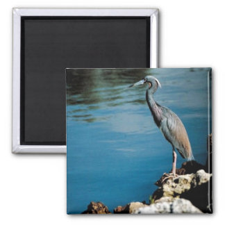Little blue heron 2 inch square magnet