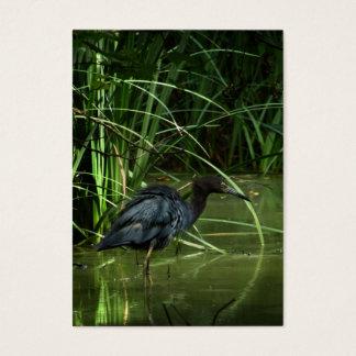 Little Blue Heron ATC Photo Card
