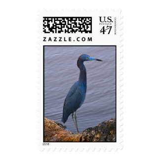 Little Blue Heron Bird Postage