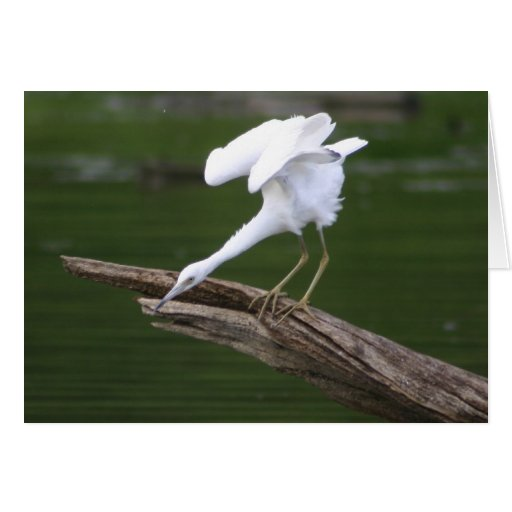 Little Blue Heron Greeting Card
