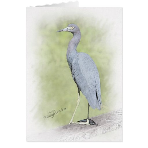 Little blue heron greeting cards