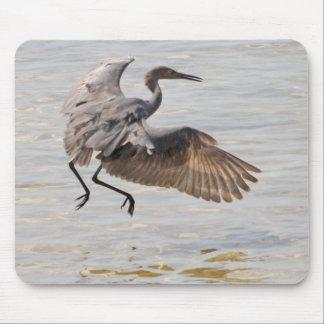 Little Blue Heron in Flight Mousepad
