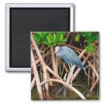 Little Blue Heron Magnet Magnets
