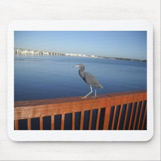 Little Blue Heron Mouse Pad