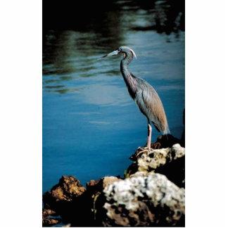 Little blue heron photo cutout