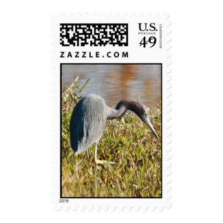 Little Blue Heron Postage Stamp