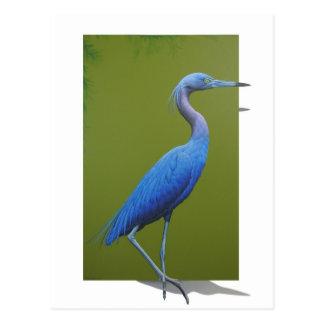 Little blue Heron Postcard